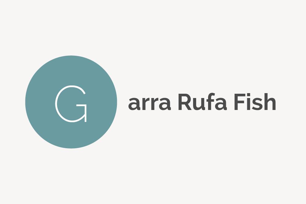 Garra Rufa Fish Definition