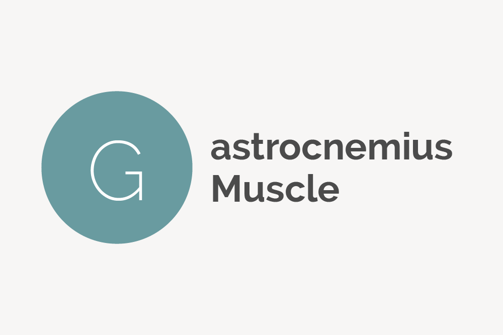 Gastrocnemius Muscle Definition