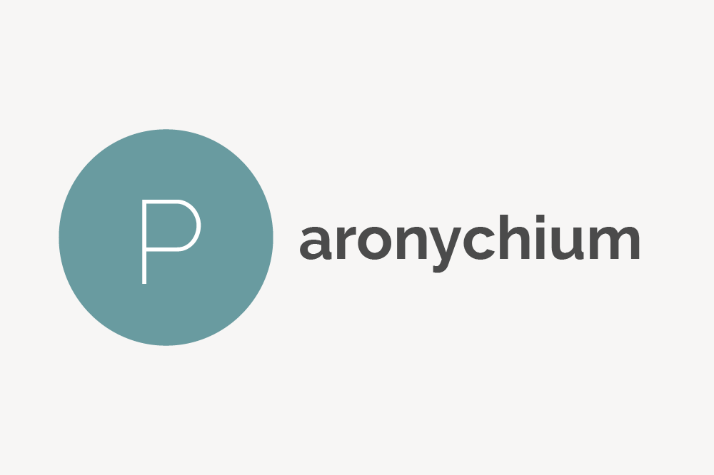 Paronychium Definition